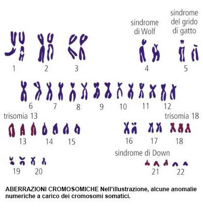Alterazioni del patrimonio genetico caratterizzate da modificazioni del  numero o della morfologia dei cromosomi. Più spesso spontanee, possono  anche venir ...
