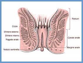 disfunzione erettile sfintere anale esterno
